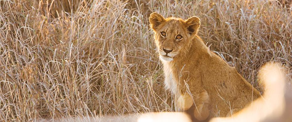 Ben & Christie. pt1. The Safari
